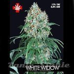 PURE SEEDS - White Widow