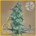 ELITE SEEDS - Amnesia Haze Ultra CBD