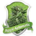 ROYAL QUEEN SEEDS - Royal Automatic®