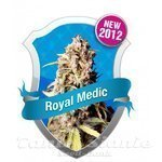 ROYAL QUEEN SEEDS - Royal Medic CBD