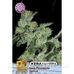 KERA SEEDS - PINEAPPLE SATIVA