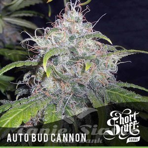 SHORT STUFF SEEDBANK - Auto Bud Cannon