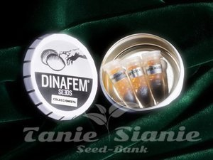 DINAFEM - Collectors Pack Nº 21