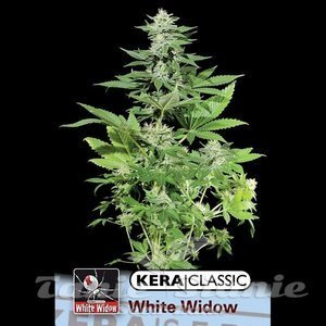 KERA SEEDS - White Widow